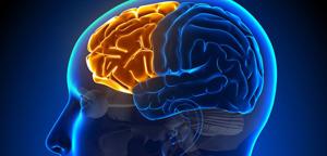「頭脳の司令塔」である前頭葉を鍛えないと、優先順位がメチャメチャになる
