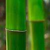 【二月堂竹送り(にがつどうたけおくり)】たいまつに使う竹を届ける京田辺市の行事 | 竹の話題003