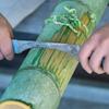 【福岡で放置の竹を丸ごと商品化】九州工業大と三省製薬のプロジェクト